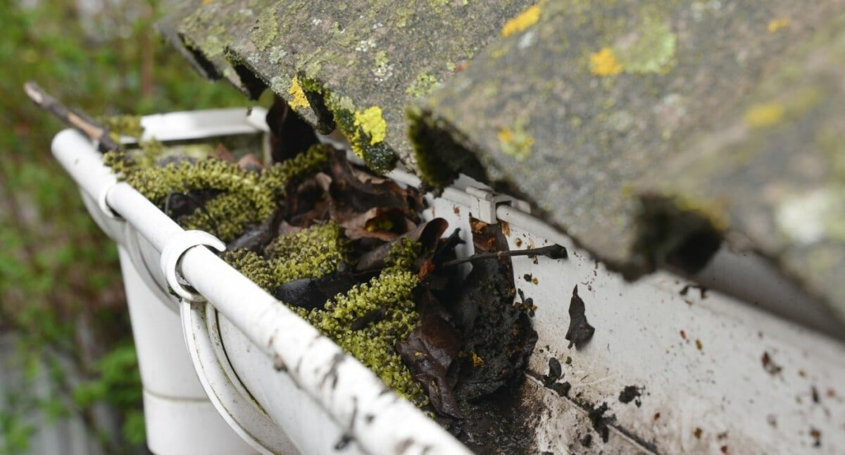 Signs You Need Your Gutters Cleaned